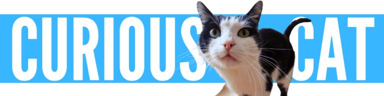 Curious Cat Review Scam or Legit